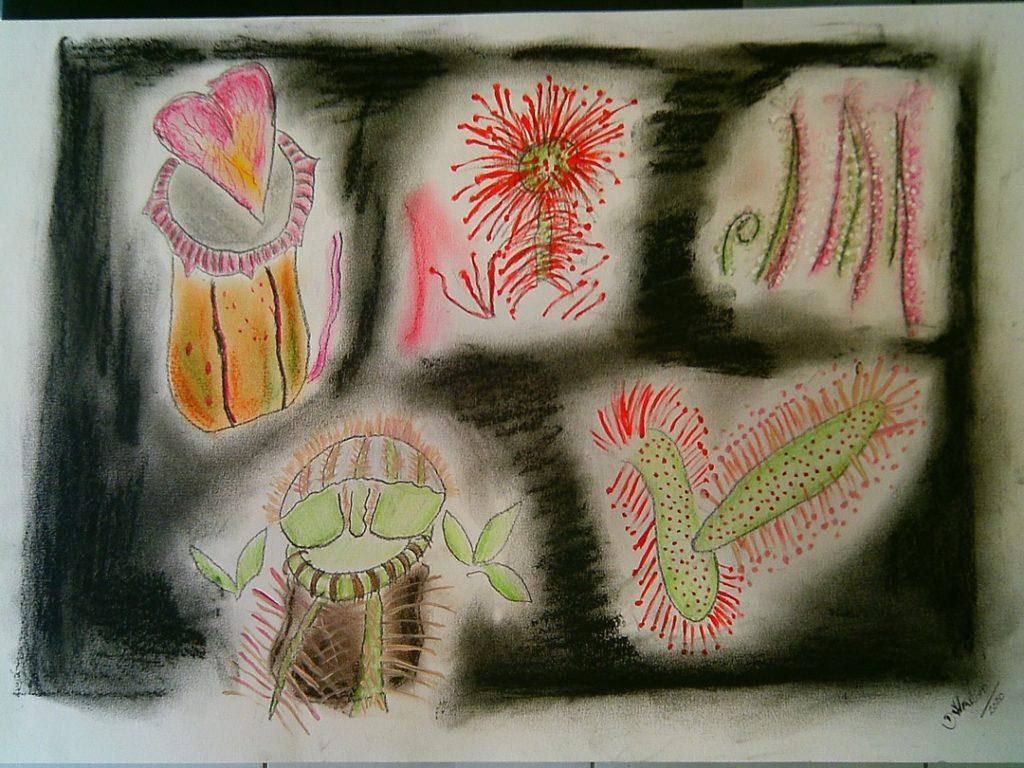 flores carnívoras 3