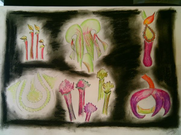 Flores-carnívoras